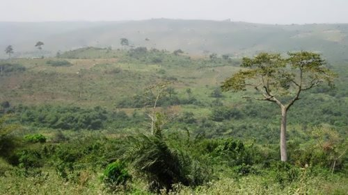 Cocoa plantations in the Akuapem Hills
