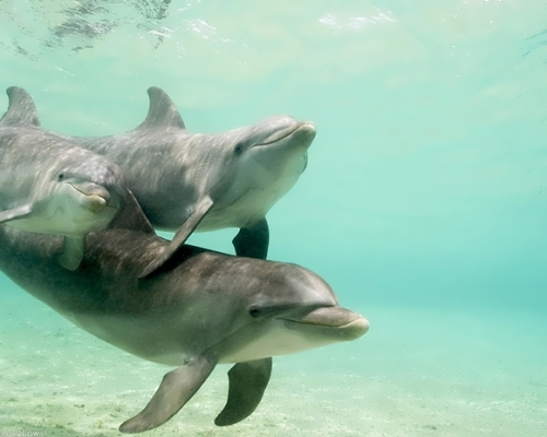 Dolphins – great creatures