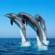 Gorgeous dolphins