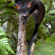 Gorgeous gecko