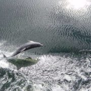 Lovely dolphin