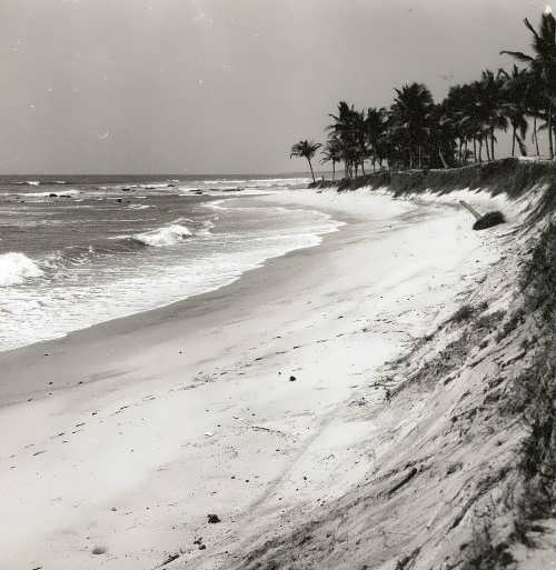 The Gulf of Guinea. Palm Grove at high tide