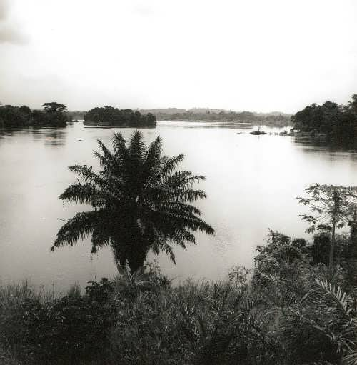 Volta River. A tropical forest