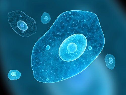 Amoeba – simplest organism