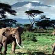 Attractive Tanzania