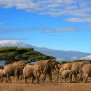 Awesome Tanzania