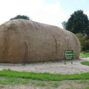 Big Potato in Australia, Robertson, New South Wales