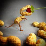 Dinosaur. Photo by Nailia Schwarz