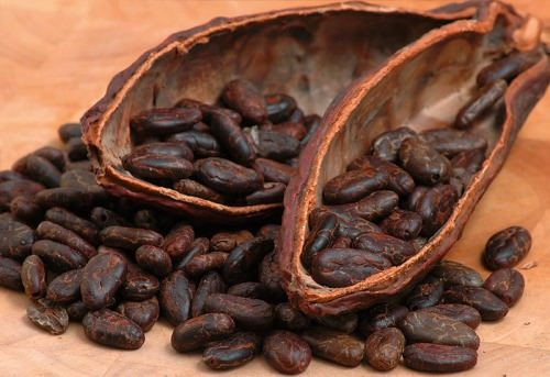Gorgeous cacao beans