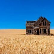 Gorgeous wheat. Photo by Jeff Edes