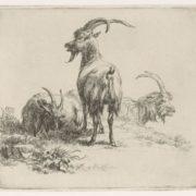 Nicolaes Pietersz Berchem. Three goats
