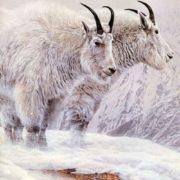 Parker, Ron - Mountain Goat
