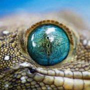 Snake's eye
