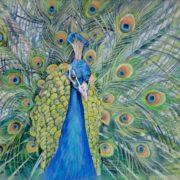 Stunning peacock