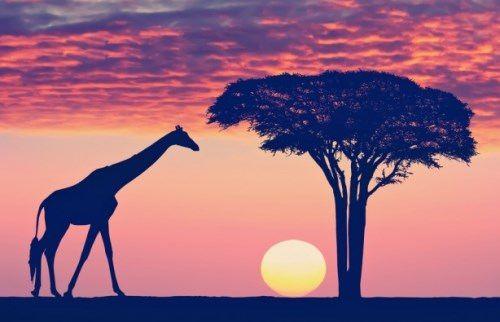 Tanzania - Land of Natural Wonders