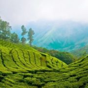 The largest tea plantation in India - Munnar