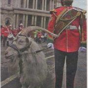 William Windsor in British army