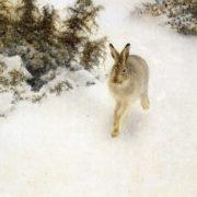 Amazing hare
