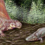 Ancient amphibians