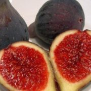 Attractive fig