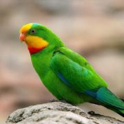 Charming parrot