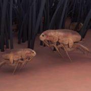Cute fleas