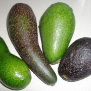 Different avocados