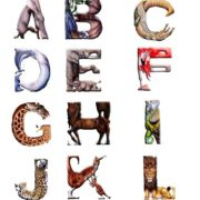 English alphabet by Casey G.