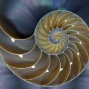 Fractals - the great mystery of creation