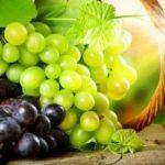 Grape – Fruit of the Vine