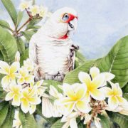Heidi Willis. Corella and Frangipanis