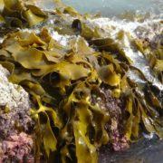 Interesting algae