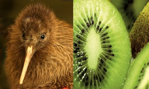 Kiwifruit and kiwibird
