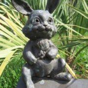 Little rabbit in Sochi