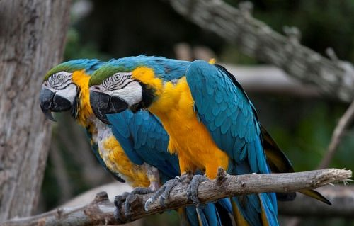 Parrot – brightly colored bird