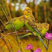 Pretty parrots by Ego Guiotto
