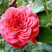Wonderful flower