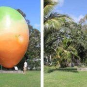 10-ton Monument of Mango was stolen