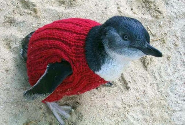 109-year-old Alfred Date knits clothes for penguins