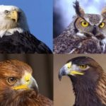 Amazing Birds of Prey