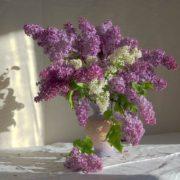 Amazing lilac
