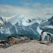 Amazing penguins