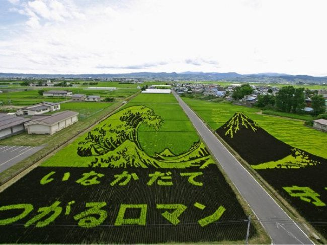 Amazing rice art