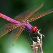 Awesome dragonfly