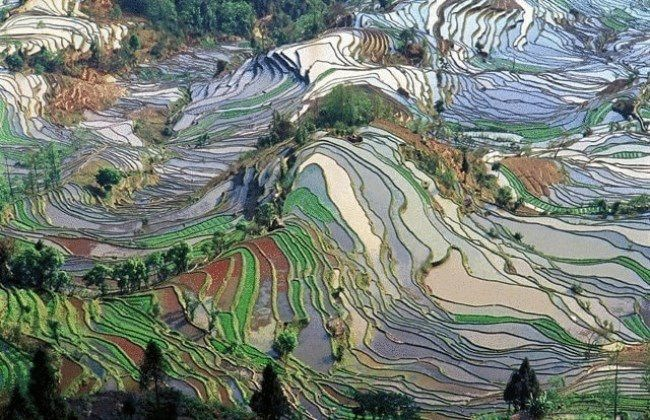 Awesome rice terraces