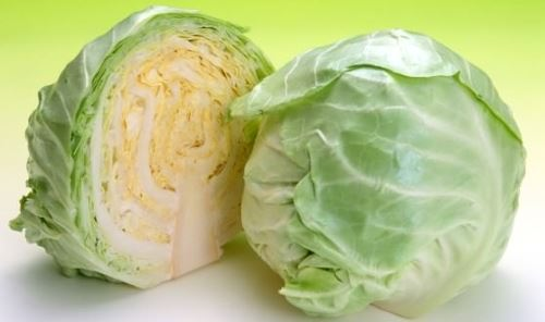 Cabbage - Head of Vegetable Family