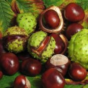 Charming chestnuts