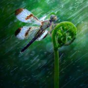 Cute dragonfly by Nott Nguyen