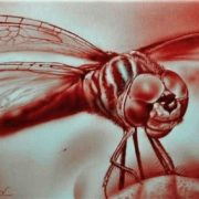 Dragonfly by Dr Rev Mayers