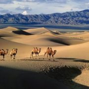 Gorgeous Gobi Desert